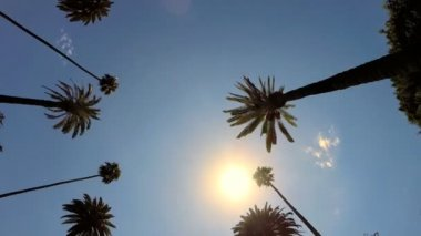 Driving under Tall Palm Trees — Stock Video