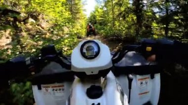 Driving off road Quad bike in forest — Stock Video