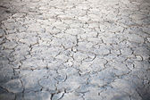 Without water on the ground — Stock Photo