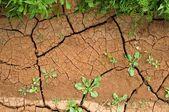 Eroze půdy, suché zemi — Stock fotografie