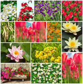 Garden, field and flowers — Stock Photo