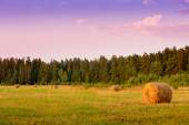 Straw bales in the field — Stock Photo