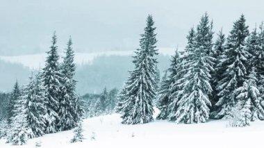 Piękny zimowy krajobraz ze śniegiem pokryte drzewami — Wideo stockowe