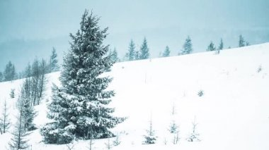 Beautiful winter landscape with snow covered trees — Stock Video