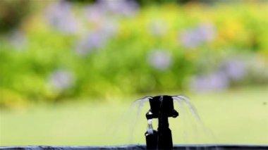 Garden Irrigation bubbler watering flower pot — Stock Video