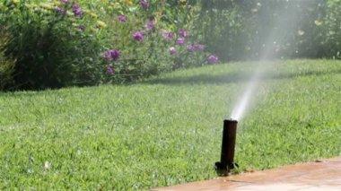 Garden Irrigation Sprinkler watering lawn — Stock Video