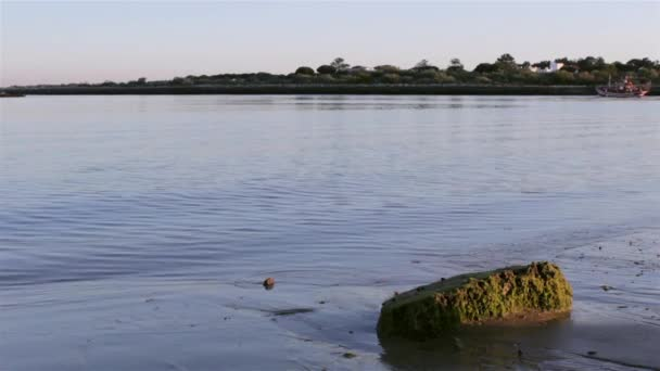 Boat traveling in background at Tavira Island, Quatro-Aguas East beach, Ria Formosa Natural Reserve. Algarve, Portugal. — Vidéo