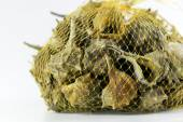 Market bag of Bolinus brandaris, an edible marine gastropod moll — Stock Photo