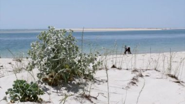 Armona costal beach view, one of the islands of Ria Formosa wetlands natural park, Algarve. — Stock Video