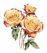 Watercolor with three yellow-pink roses composition — Stockfoto