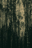 Sylwetka lasu — Wektor stockowy
