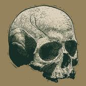 Skull. Engraving style — Wektor stockowy