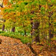 Pathway in colorful autumn arboretum park — Stock Photo #52569855