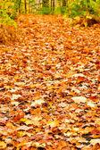 Pathway in colorful autumn arboretum park  — Stock Photo