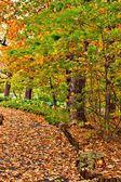 Sentier dans le parc arboretum automne coloré — Photo