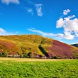 Colorful landscape scenery of Pentland hills slope covered by vi — Stock Photo #53953249