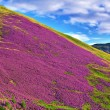 Colorful landscape scenery of Pentland hills slope covered by vi — Stock Photo #53953377