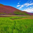 Colorful landscape scenery of Pentland hills slope covered by vi — Stock Photo #53954235