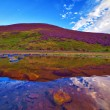 Colorful landscape scenery of Pentland hills slope covered by vi — Stock Photo #53954317