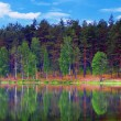 Beautiful forest reflecting on calm lake shore — Stock Photo #53955329