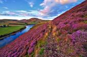 Beautiful landscape of scottish nature — Photo