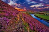 Beautiful landscape of scottish nature — Stock Photo
