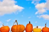 Pumpkins on the sky background — Stock Photo