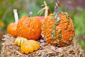 Variety of Pumpkins on hay — Stock Photo