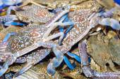 Fresh blue crabs on ice exposition at the seafood market In Thai — Stock Photo