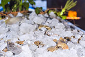 Various fresh seafood on ice exposition at the outdoor restauran — Stock Photo
