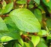 Hoja verde con gotas de agua después de la lluvia — Foto de Stock