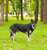 Black dog in the park — Stock Photo