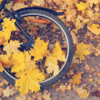 Bicycle wheel in the yellow leaves — Stock Photo #54794237