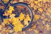 Bicycle wheel in the yellow leaves — Stock Photo