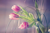 Beautiful flowers made with color filters — Stock Photo