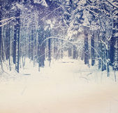 Winter landscape, deep in the forest — Stock Photo