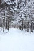 冬季景观,在森林深处 — 图库照片