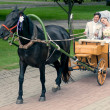 Bride and groom riding in carriage — Stock Photo #52383433