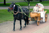 Bride and groom riding in carriage — Stock Photo