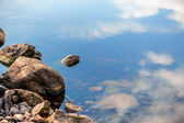 Stone on lake — Stock Photo
