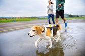Couple walk dog in rain. — Stock Photo