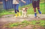 Young couple walk dog in rain — Stock Photo