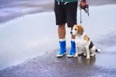 Man walking dog in rain — Stock Photo