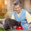 Senior woman feeding her gray cat — Stock Photo #62136993