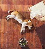 Dog on a terrace — Zdjęcie stockowe