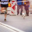Runners and a dog at the city race — Stock Photo #70886345