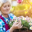 Senior woman with flowers — Stock Photo #71435621