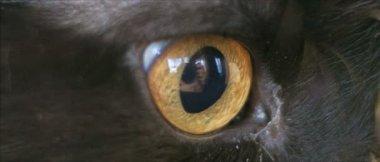 Little black cat. — Stock Video