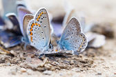 Butterfly family — Stock Photo