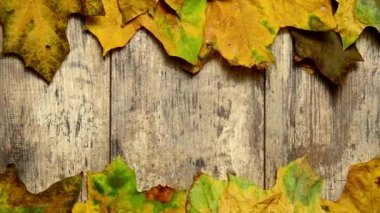Autumn leaves on the old wooden floor — Stock Video